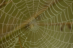 Spider net. Spieder net after rain in early morning Royalty Free Stock Photos
