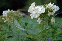 Spider net Stock Photo