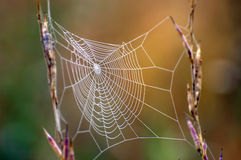 Spider net stock images