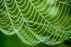 Spider net Stock Image