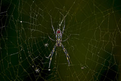 Spider&net. Spiders weaving for themselves a Net Stock Photography