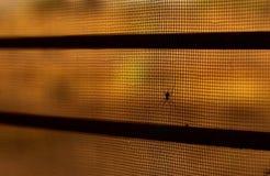 Spider on net beautifu l caption stock image