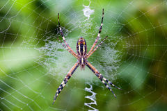 Spider. On net close-up short Stock Image