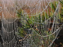 Spider net in dew Royalty Free Stock Photography