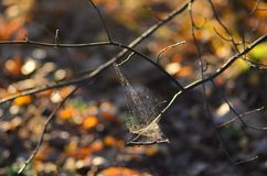 A spider net on a dried branch royalty free stock photo