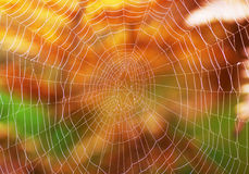 Spider net Royalty Free Stock Photo