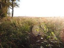 Spider net in grass in swamp Stock Photo