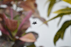 Spider in net Stock Images