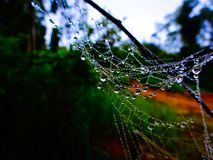 Spider net at the morning stock image