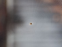 Spider Net Royalty Free Stock Photography