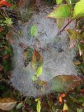 Spider net photo in the morning stock image