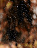 Spider net Stock Photography