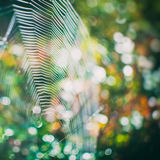 Spider net. Shallow depth of field Royalty Free Stock Photography