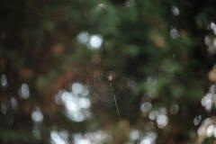 Spider net Royalty Free Stock Photo