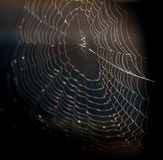 Spider net Royalty Free Stock Image