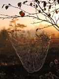 Spider net in swamp Stock Images