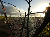 Spider net on tree branch in sunrise, Lithuania stock image