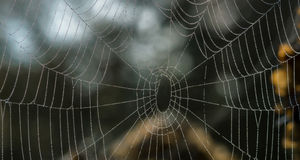 Spider net with water drops Royalty Free Stock Images