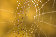 Spider net with water drops Stock Photography