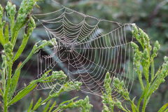 Spider net Royalty Free Stock Photos