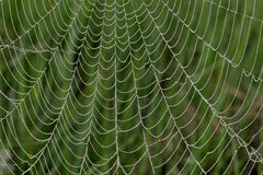Spider net with water drops. Royalty Free Stock Photos