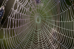 Spider net with water drops Royalty Free Stock Image