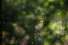 Spider net with water drops Royalty Free Stock Photos