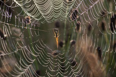 Spider net with water drops Royalty Free Stock Photography