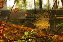 Spider nets , Aarey Milk Colony ,INDIA. Spider nets , Aarey Milk Colony INDIA Stock Images