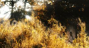 Spider nets on an autumn meadow at the forest in the morning light with sunrays, halloween or nature background, copy space. Selected focus, narrow depth of royalty free stock image