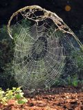 Spider nets with morning dew, Lithuania Stock Photo