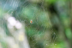 Spider is netting. In a garden Stock Image