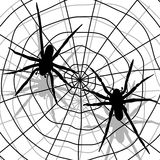 Spider and network Royalty Free Stock Photos