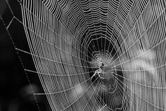 Spider network Stock Photos