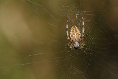 Spider in network Stock Photo