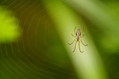 Spider in network Royalty Free Stock Photography