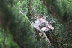 Spider& x27; nido di s Fotografie Stock