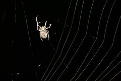 Spider at Night Royalty Free Stock Images