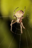 Spider in the night Stock Photo