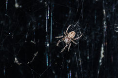 Spider. Night. Spider on the web Stock Images