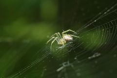 Free Spider On His Web Stock Photo - 112699810