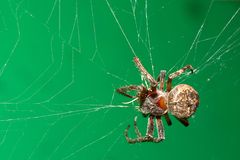 Free Spider On The Cobweb Stock Photography - 3253802