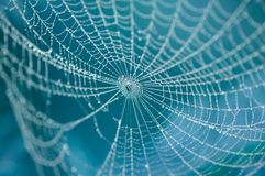 Free Spider On Web Royalty Free Stock Photos - 4024868