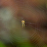 Spider outdoor Stock Photography