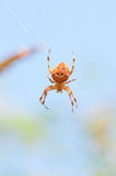 Spider outdoor Stock Photos