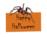 Spider Over Happy Halloween Sign Stock Images