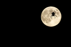 Spider over moon Royalty Free Stock Photography