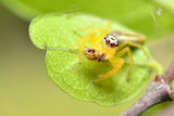 Spider and The Pacemakers strange. Jumping Spider Up Side Down Stock Images