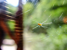 The spider pass through wooden house. The Spider net in the wild Stock Photo
