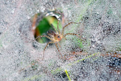 Spider on dew pearl Stock Images